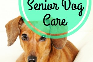 3 Tips For Senior Dog Care #BrightMind