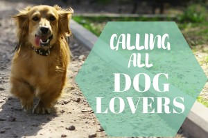 Calling all Dog Lovers!