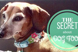 The Secret About Dog Foods #HealthyPetHappyPet