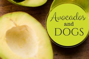 Avocados and Dogs