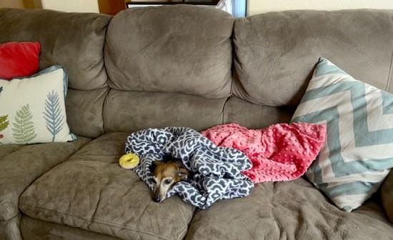 dog snuggie sac couch