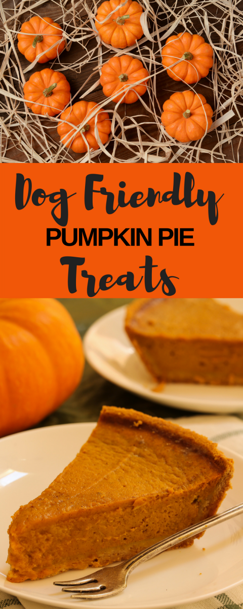 Dog Friendly Pumpkin Pie Treats Pink Cake Plate